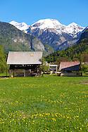 Alpine pastures near Bled, Slovenia.