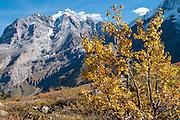 Herbst in das Lauterbrunnental