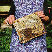 Margareta Babeti, a Romanian peasant farmer holds honeycomb from the beehives in her garden, Bunesti, Romania