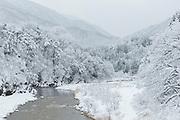 River through snowy forest in Shirakawa-go, Japan