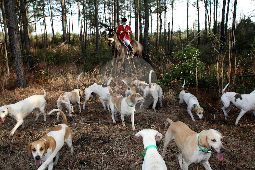 The Master of the Hounds prepares for a drag hunt at Middleton Plantation in Charleston, SC. A drag hunt similates a fox hunt but without killing any animals. The tradition was started at Middleton Plantation 50-years ago. The huntsman is Jamie Green.