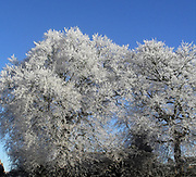 Frost covering trees , England, Winter