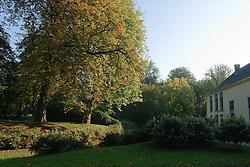 Vijverberg stinzenplanten