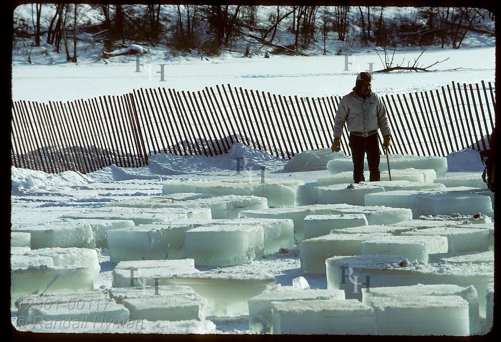 Man surveys dozens of ice blocks cut from Pickerel Lake for ice sculptures;St Paul Wntr Carnival Minnesota