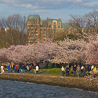 Tourists walk under blooming cherry trees beside the Tidal Basin in Washington, D.C.
