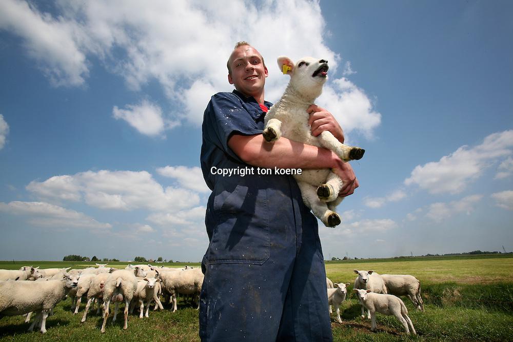 sheep-shearing in spring