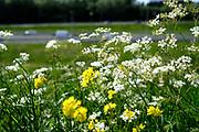 Gras, bloemen en onkruid in een veld - Grass, flowers and weeds in a field