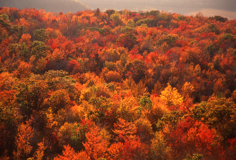 Fall foliage, Allegheny National Forest, Warren Co., PA