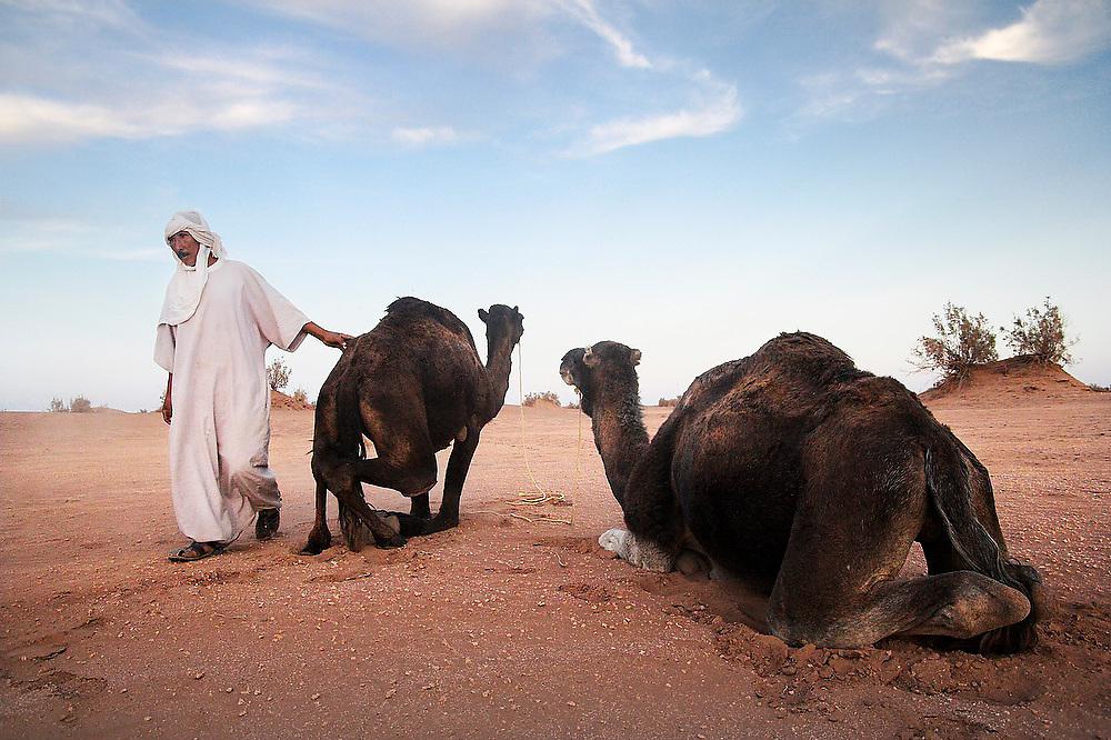 Camel guide Elhussein Sbiti with his two camels on a three-day trek to the remote sand dunes of Erg Zehar, near M'hamid in the Moroccan Sahara. Sbiti, like many berber nomads in the region, has found opportunity in the new tourism trade burgeoning since the settling of tensions between Morocco and neighboring Algeria..