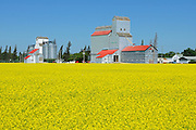 Grain elevators and canola<br /> Cypress River<br /> Manitoba<br /> Canada