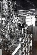 Christmas decoration at a company USA 1946