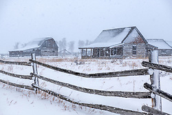Derelict Log Jackson Hole Homestead, the falling snow accentuate the feeling of desolation of the deserted.