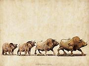 The Evolution of a Bull Market. Photo illustration for Wall Street Journal.