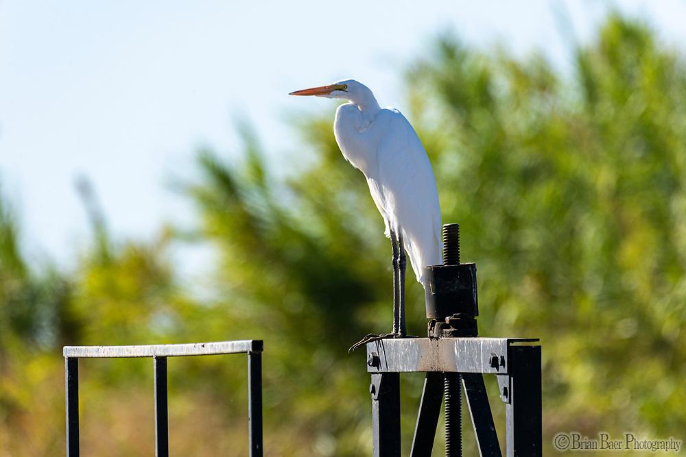 Bird on Woodruff Lane in Marysville CA, Wednesday, September 29, 2021.<br /> Photo Brian Baer