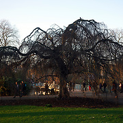 Weather: First day of Spring in St James Park,London,UK. by See Li