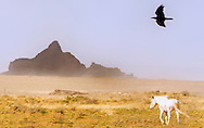 White Horse, Raven, Navajo Nation, south of Shiprock, New Mexico
