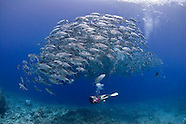 Philippines Diving & People