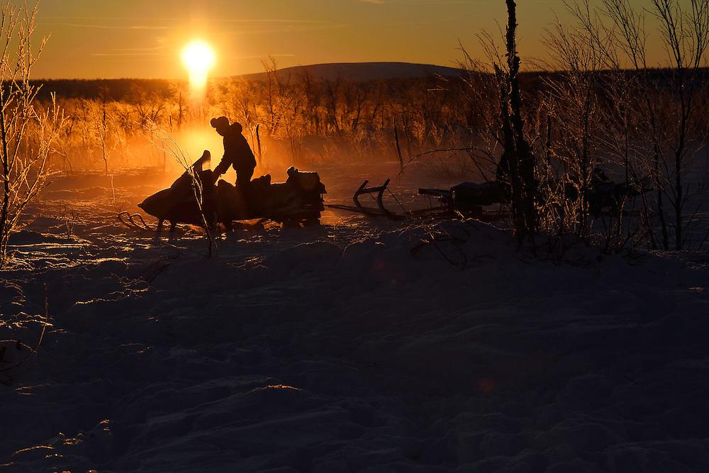 Reindeer herding on snowmobile in the Saarivuoma Sami community, at at Järämä, Övre Soppero, Lapland, Laponia, Norrbotten county, Sweden