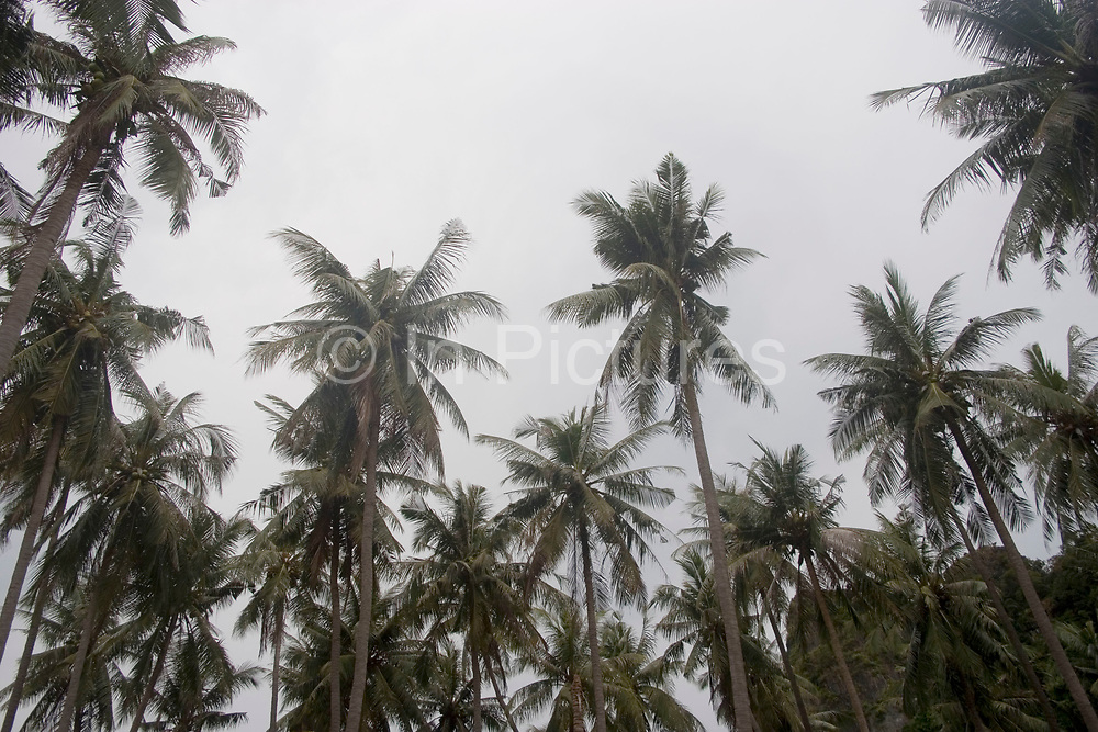 Tall palm trees at East Railay