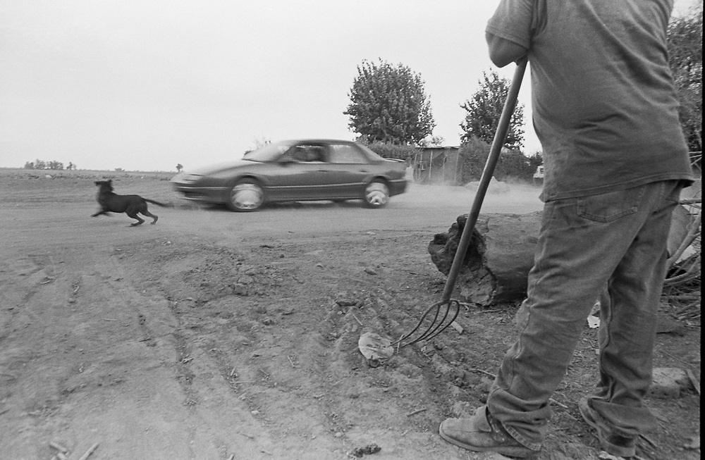 Cars and dogs on the outskirts of town.