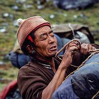 Sherpa Yak Driver