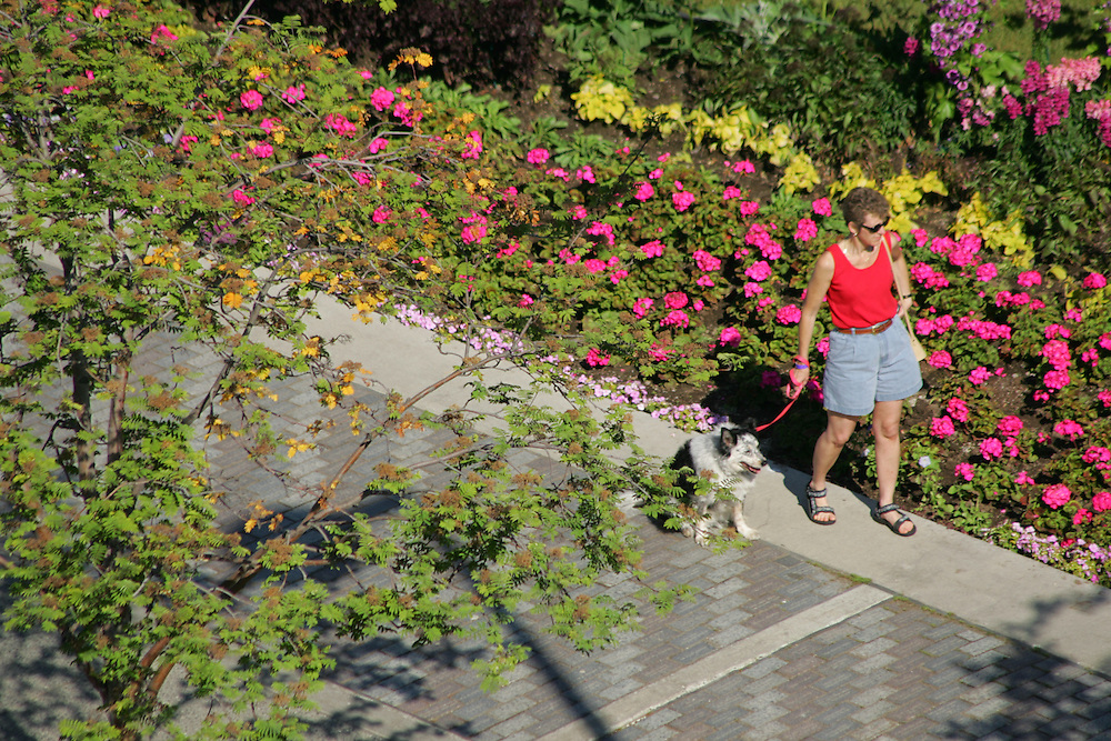 Flowers at Town Square, Anchorage, Alaska