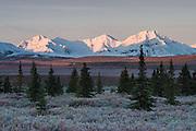 Mountains of The Alaska Range above fall colors of the tundra, Denali National Park, Alaska