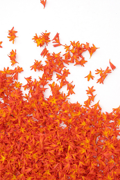 Flowerart: Montbretia, irish Wildflowers / fa015