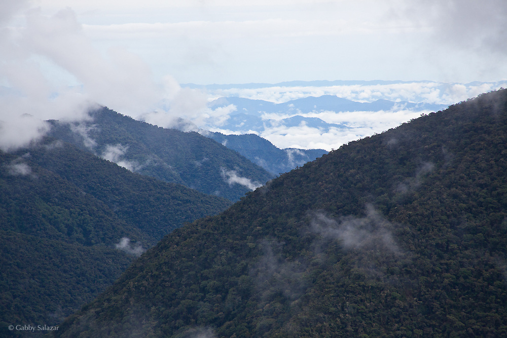 View from Wayqecha Biological Reserve on the Eastern slopes of the Peruvian Andes. Cloud forest at 2950 meters elevation. The reserve is managed by the Amazon Conservation Association and the Asociación para la Conservación de la Cuenca Amazónica.