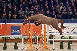 013, Kwiltland Jr<br /> KWPN Stallionshow - 's Hertogenbosch 2018<br /> © Hippo Foto - Dirk Caremans<br /> 01/02/2018