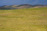Landscape Bayanbulagu Gatcha, grassland steppe, Inner Mongolia, China