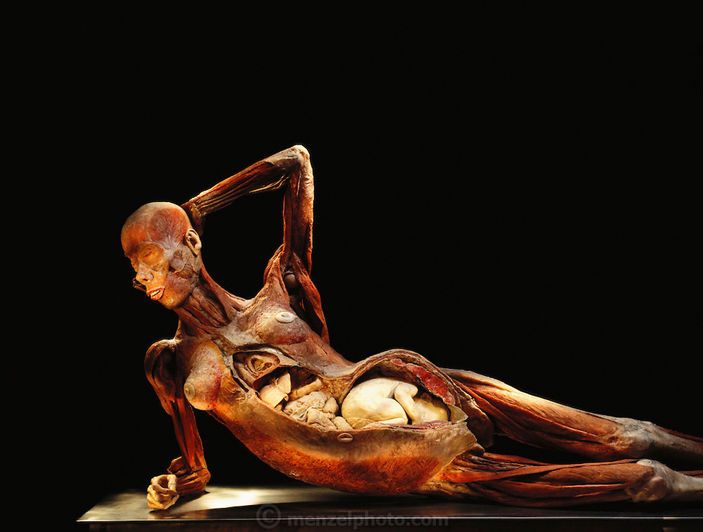 """""""Pregnant Woman,"""" a piece from Gunther von Hagens' Body Worlds exhibits. Body Worlds is a traveling exhibit of real, plastinated human bodies and body parts. Von Hagens invented plastination as a way to preserve body tissue and is the creator of the Body Worlds exhibits.."""