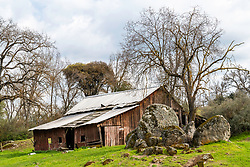 An old barn in a cool rocky and leafy landscape in spring at Badger California.  Badger is in the Sierra Foothills.