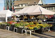 Flowers and plants on market stall in Svolvaer, Lofoten Islands, Nordland, Norway