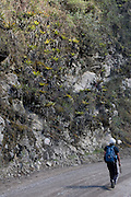 William Nauray walks along the Interoceanic Highway below a cluster of Bromeliads