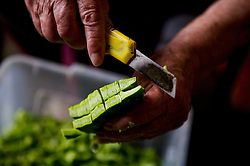 Nopales is a vegetable that can be eaten grilled or boiled. The term Nopalitos refers to the pads once they are cut up and prepared for eating.