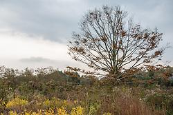 Fall plants and trees in Southampton, NY
