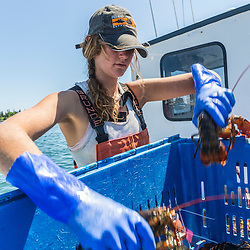 Sternwoman, Lillian Saul sorts lobsters aboard 'Evening Call' at the Vinalhaven Fishermen's Co-op in Vinalhaven, Maine.
