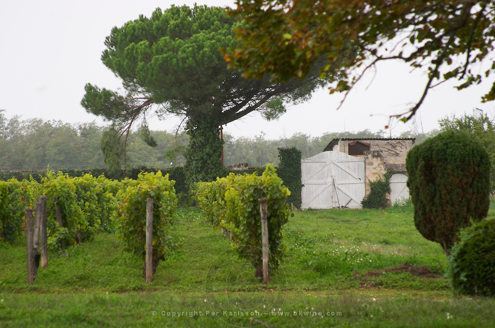The garden or park at the chateau is mainly used as a vineyard Chateau de Cerons (Cérons) Sauternes Gironde Aquitaine France