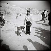 An Afghan boy with a mastiff dog for a dog fight  in Kabul, Afghanistan, Friday, Nov. 3, 2006.
