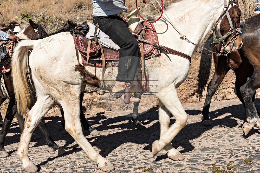 Detail of a Mexican cowboy snake on the final leg of the annual Cabalgata de Cristo Rey pilgrimage January 5, 2017 in Silao, Guanajuato, Mexico. Thousands of Mexican cowboys and horse take part in the three-day ride to the mountaintop shrine of Cristo Rey.