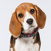 20111129 Karen All Dogs