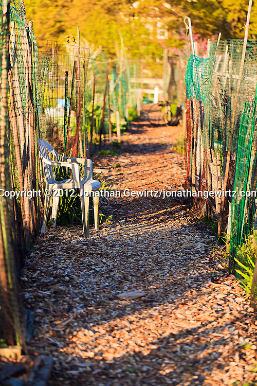 A walking path in an urban community garden. WATERMARKS WILL NOT APPEAR ON PRINTS OR LICENSED IMAGES.