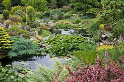 Pond with water lilies at John Massey's garden, Ashwood Nurseries.