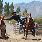 Gus Spence from Balclutha in action during the Open Steer Wrestling competition at the Wanaka Rodeo. Wanaka, South Island, New Zealand. 2nd January 2012