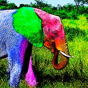 Digitally enhanced image of a young elephant