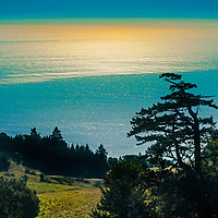 A wind-twisted conifer and forest copses grow on the western slopes of California's Mount Tamalpais, above the Pacific Ocean. This is just a short drive from downtown San Francisco.