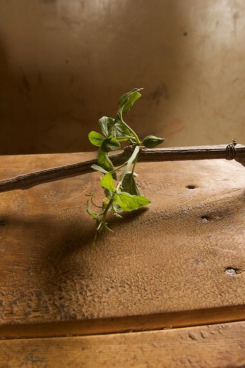 Medicinal plant sample 7
