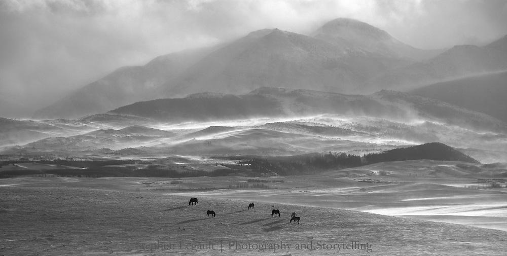 Horses, Storm, Badger Two Medicine, Montana