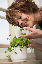 Senior woman picking parsley plants on window sill at home and smiling, Munich, Bavaria, Germany